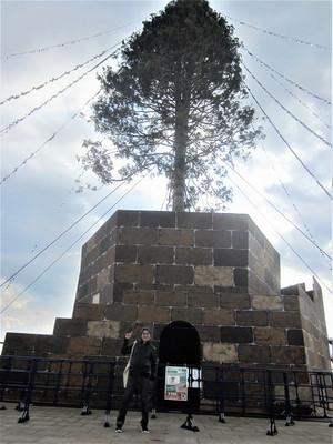 Sekai1noxmastree