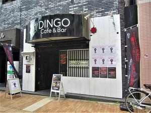 Dingowc