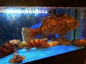 Fish20190204